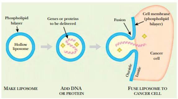 a discussion on gene therapy as an unnecessary treatment for mankind Original article gene therapy (2012) 19, 1101–1106 doi:101038/gt2011196 published online 1 december 2011 manipulation of mtdna heteroplasmy in all striated muscles of newborn mice by aav9-mediated delivery of a mitochondria-targeted restriction endonuclease.