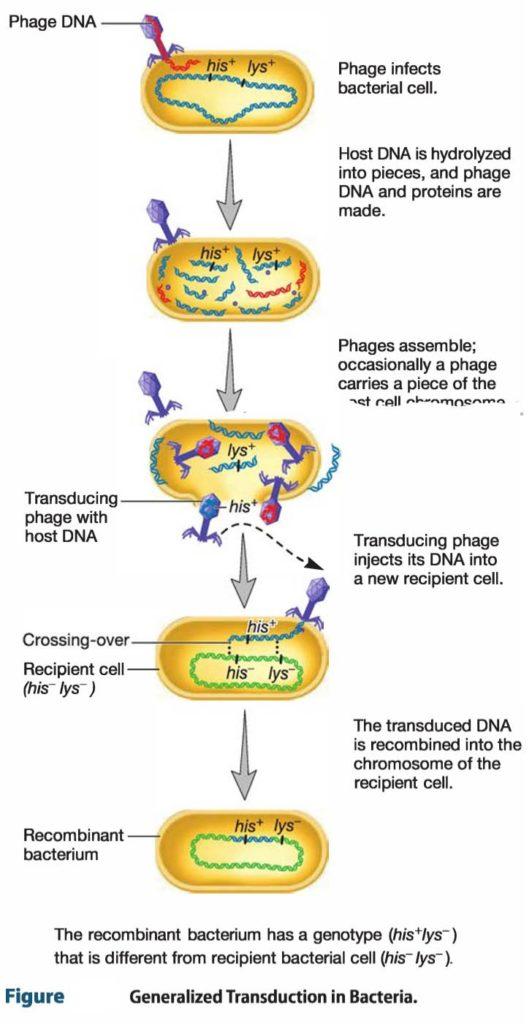 generalized-transduction