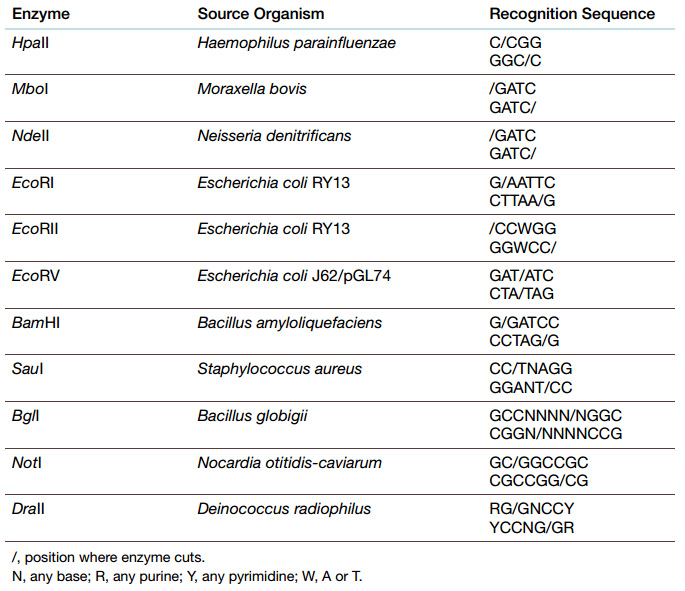 restriction enzymes endonucleases methylation palindromic sequence