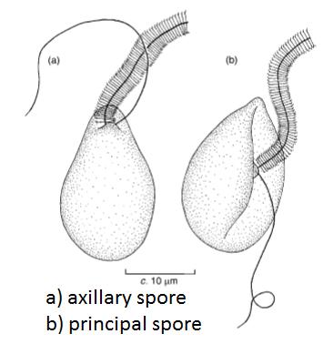 zoopore-types