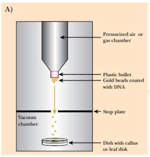 Figure A: a gene gun that operates via pressurized air is shown