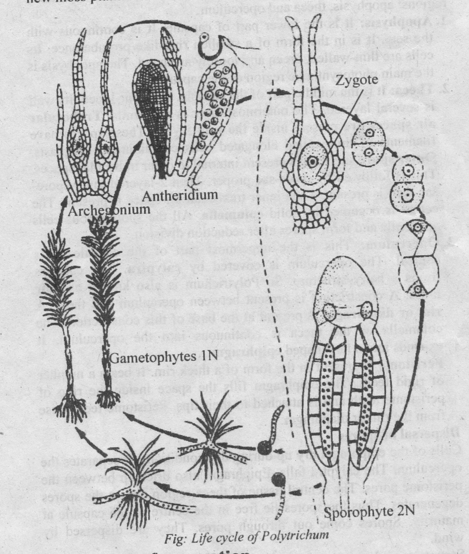 Life Cycle Of A Labeled Moss Diagram: Alternation Of