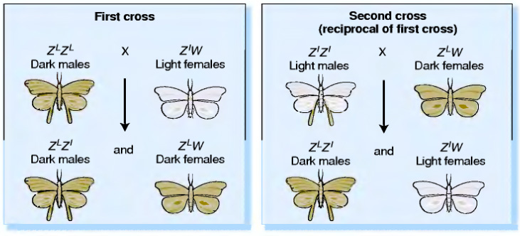 Fig: Moth wings