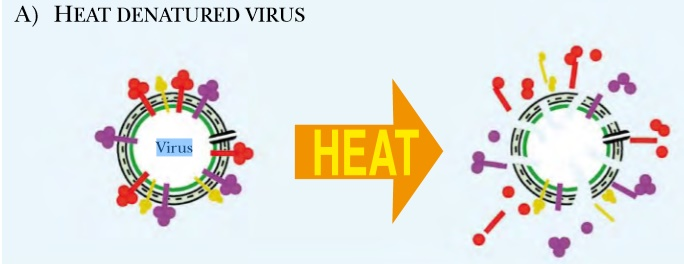 heat denature virus
